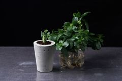 Succulent plant in handmade concrete pot in room decoration for cactus lover. Succulent plant in handmade concrete pot in room decoration royalty free stock photography