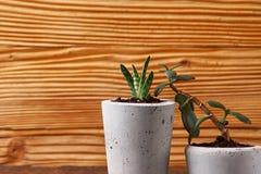 Succulent plant in handmade concrete pot in room decoration for cactus lover. Succulent plant in handmade concrete pot in room decoration stock image