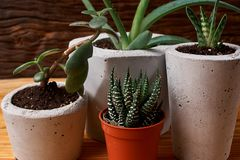 Succulent plant in handmade concrete pot in room decoration for cactus lover. Succulent plant in handmade concrete pot in room decoration stock photography