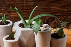 Succulent plant in handmade concrete pot in room decoration for cactus lover. Succulent plant in handmade concrete pot in room decoration royalty free stock photos