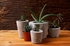 Succulent plant in handmade concrete pot in room decoration for cactus lover. Succulent plant in handmade concrete pot in room decoration stock photos