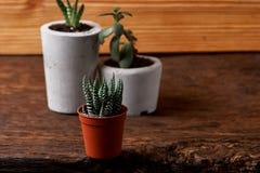 Succulent plant in handmade concrete pot in room decoration for cactus lover. Succulent plant in handmade concrete pot in room decoration stock photo