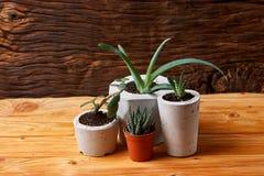 Succulent plant in handmade concrete pot in room decoration for cactus lover. Succulent plant in handmade concrete pot in room decoration stock images