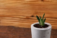 Succulent plant in handmade concrete pot in room decoration for cactus lover. Succulent plant in handmade concrete pot in room decoration royalty free stock images