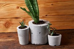Succulent plant in handmade concrete pot in room decoration for cactus lover. Succulent plant in handmade concrete pot in room decoration royalty free stock image