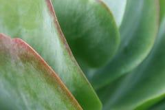 Succulent Plant Macro Stock Images
