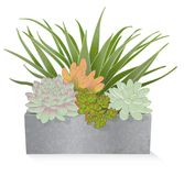Succulent Plant Mix in Galvanized Planter Box Royalty Free Stock Images