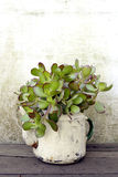 Succulent plant in old kettle Stock Image