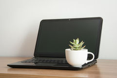 Succulent plant in pot on computer Royalty Free Stock Image