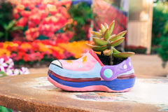 Succulent plant in shoe-shaped flowerpot Stock Images