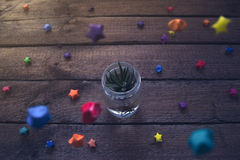 Succulent planted in pot with Christmas decoration royalty free stock image