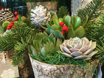 Succulent plants arrangement Stock Photos