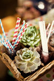 Succulent plants in a basket Stock Photos