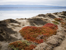Succulent plants on a berm along the east bay shoreline. Red and green succulent plants growing on a berm near Coyote HIlls Regional Park marking the beginning Stock Images