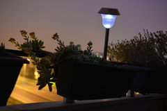 Succulent Plants Blossom, Home Balcony, Flowers And Lighted Garden Lamp, Night Scene Stock Photo