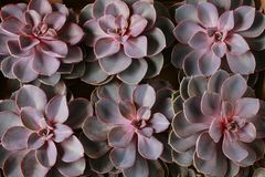 Succulent plants in the box royalty free stock photos