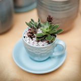 Succulent plants close-up Royalty Free Stock Images