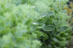 Succulent plants closeup Royalty Free Stock Photos