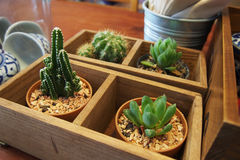 Succulent plants. In coffee shop Stock Photography