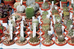 Succulent plants collection in small pots Stock Image