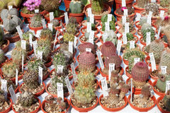 Succulent plants collection in small pots with tags Royalty Free Stock Image