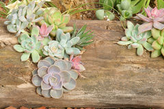 Succulent plants and dead wood. The many succulent plants are planted in dead wood Stock Photos