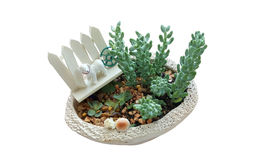 Succulent plants with dog toy decoration on small pot isolate Royalty Free Stock Photography