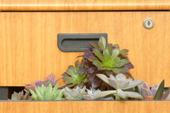 Succulent plants and drawer. Some of succulent plants is growing in drawer Stock Image
