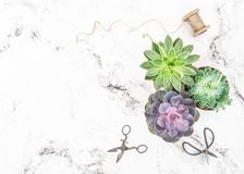 Succulent plants floral flat lay. On bright background royalty free stock photo