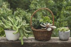 Succulent plants Stock Photography