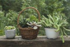 Succulent plants Stock Images