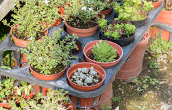 Succulent plants. In a garden royalty free stock photography