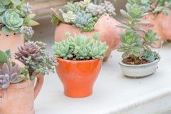 Succulent plants. In a garden stock photos
