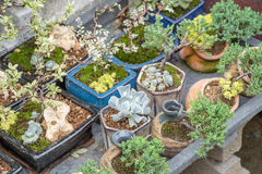 Succulent plants. In a garden royalty free stock images