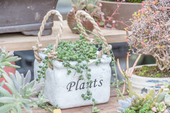 Succulent plants. In a garden stock images