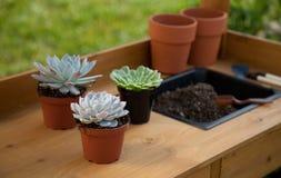 Succulent Plants On Garden Bench. Closeup of assorted succulent plants and clay pots on garden bench ready for planting season Stock Photo