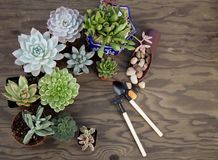 Succulent Plants For Garden Stock Photography