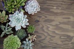 Succulent Plants For Garden. Closeup of assorted succulent plants on wooden table ready for planting in garden. Copyspace Stock Image
