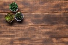 Succulent plants grouped on table royalty free stock photo