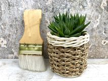 Succulent plants. Haworthia succulents plants in the potted near brushes,closeup Stock Photos