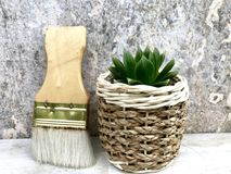 Succulent plants. Haworthia succulents plants in the potted near brushes,closeup Royalty Free Stock Images
