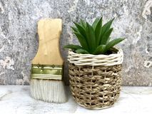 Succulent plants. Haworthia succulents plants in the potted near brushes,closeup Stock Image