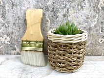 Succulent plants. Haworthia succulents plants in the potted near brushes,closeup Stock Images