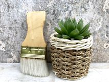 Succulent plants. Haworthia succulents plants in the potted near brushes,closeup Stock Photo