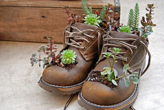 Succulent Plants In Boots Stock Image