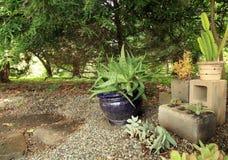 Succulent plants inside center blocks in a succulent garden. Many succulent plants inside a center block planters. also one blue planter. Inside a succulent stock photo