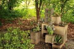 Succulent plants inside center blocks in a succulent garden. Many succulent plants inside a center block planters. Inside a succulent garden. Also tree in the stock photos