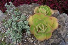 Succulent Plants Landscape Stock Photography