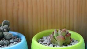 Succulent plants stock footage