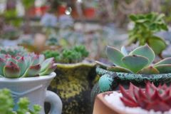Succulent plants planted in the porcelain jar. stock photo